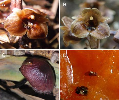 Freeloading orchid relies on mushrooms above and below