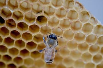 の 作り方 蜂の巣
